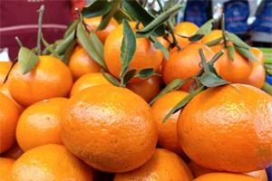 冬令水果甜美 鮮採鮮食 最潮!