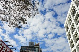喜莯民宿SEE MOON B&B|日月潭清新質感民宿,咖啡廳等級的早餐很讓人期待唷!!